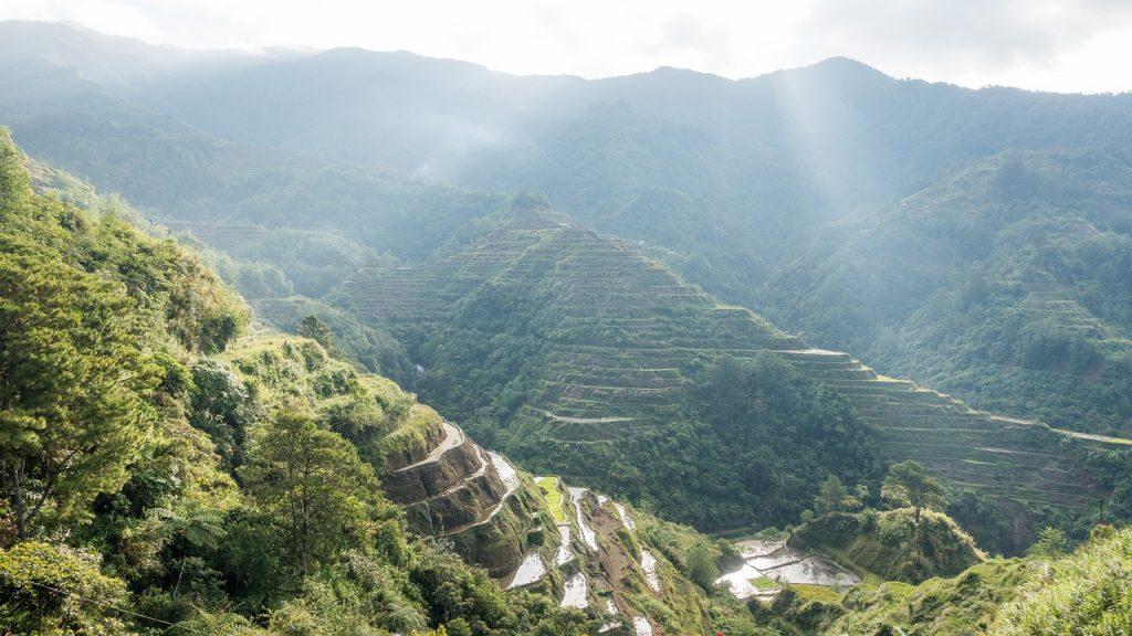 La culture du Riz aux Philippines